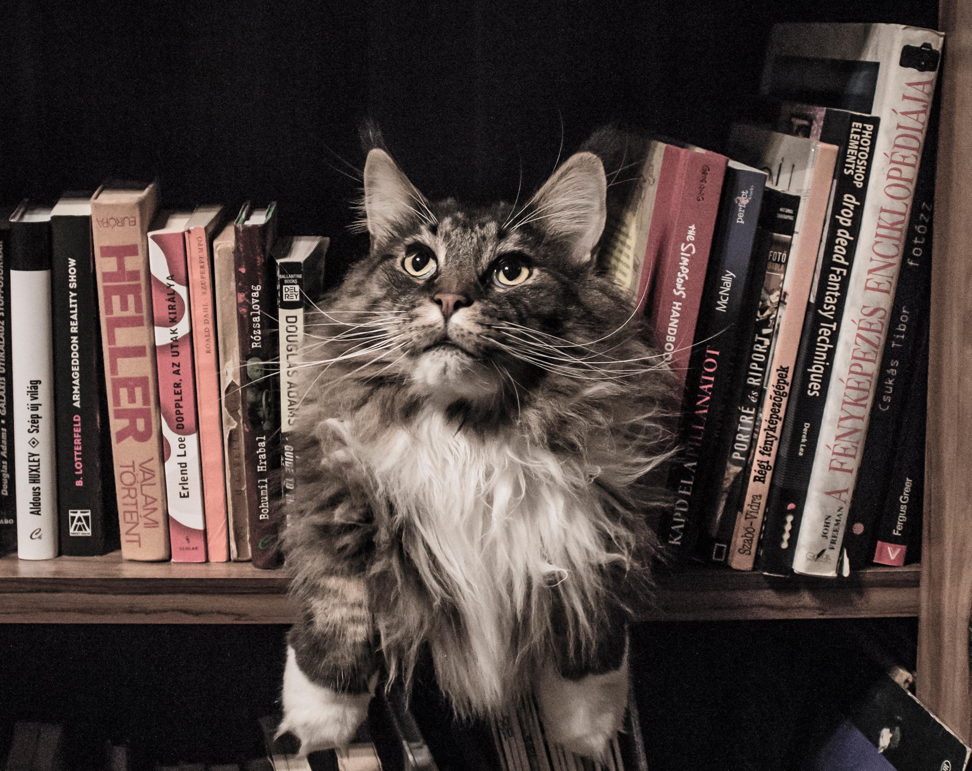 Katzen und Schriftsteller