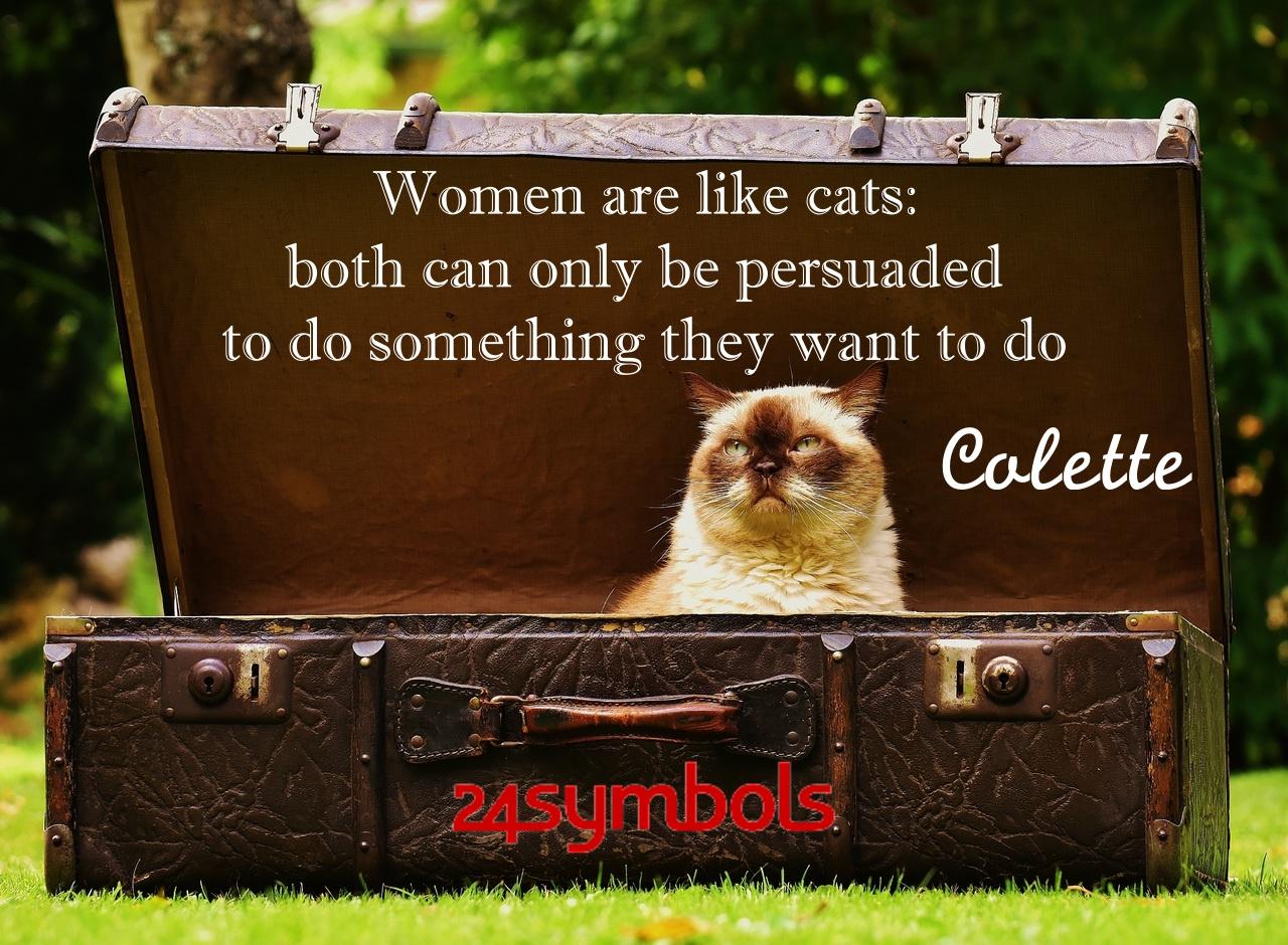 Colette Cat Quote