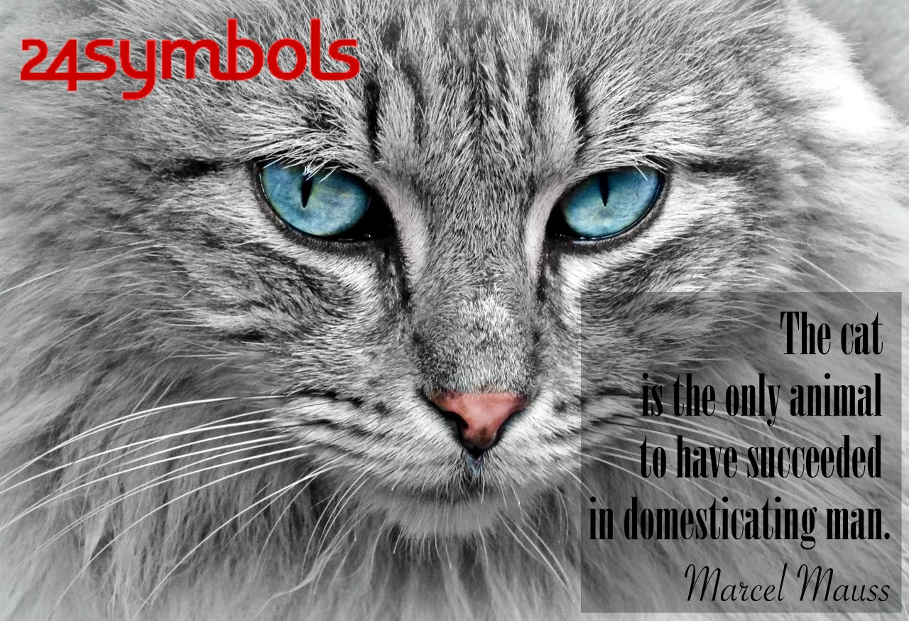 Marcel Mauss Cat Quote