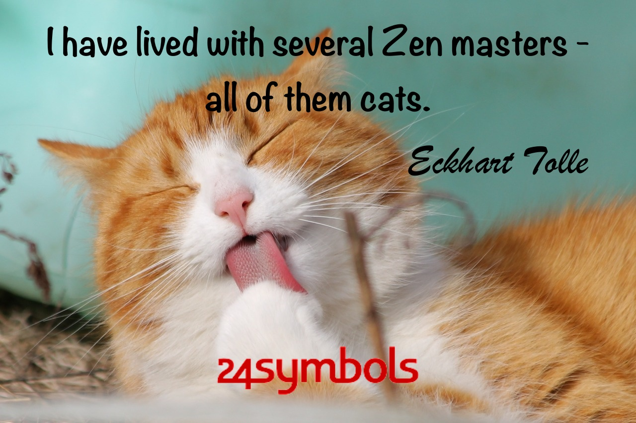 Eckhart Tolle Cat Quote